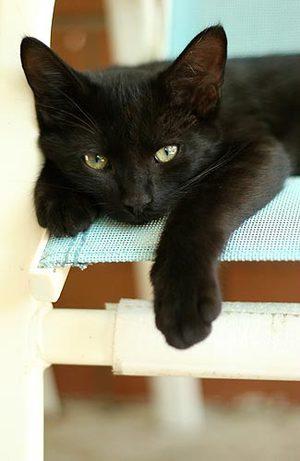 Cat1_1