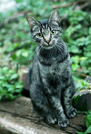 Cat3_1